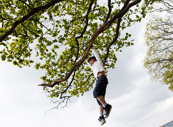 Boy playing in tree.
